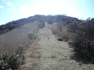 森のたね 富士山田舎暮らし日記 粘菌のような森