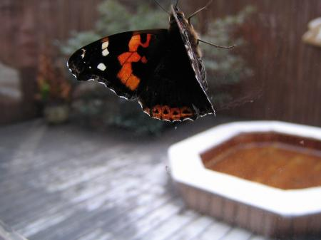 4417蝶