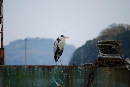 0941桟橋の鳥