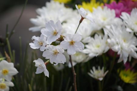 0958桜