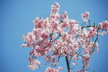 0994空に咲く