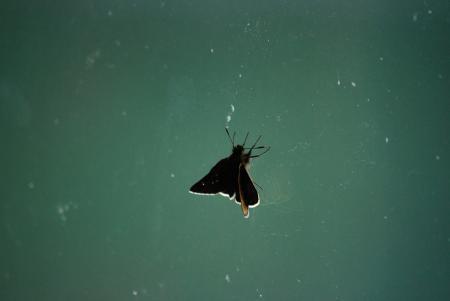 1405セセリ蝶