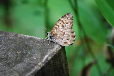 1397木に蝶