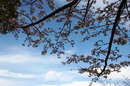 春が来た・・・はず