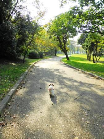 お散歩は大好きでち♪