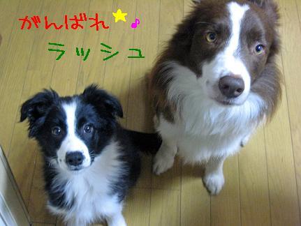 2009.3.5ラッシュ&DIVAくりそつ縮小_edited