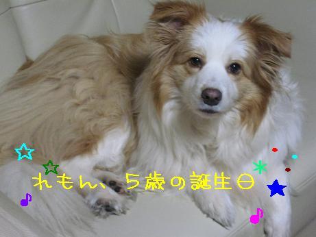 2009.3.6れもん5歳誕生日翌日