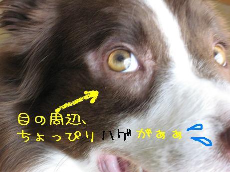 ラッシュ右目
