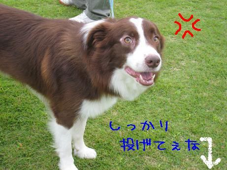 2009.7.26福井今庄にてラッシュ