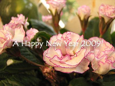2009-01-06.jpg