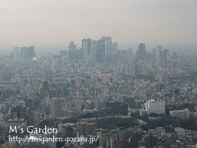 2009-01-18-03.jpg