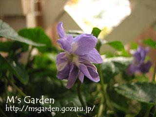 2009-02-05-01.jpg