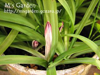 2009-03-05-25.jpg