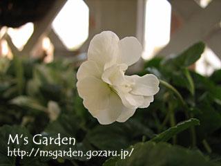 2009-03-05-27.jpg