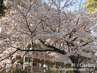 2009-04-06-03.jpg