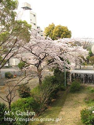 2009-04-06-06.jpg