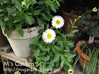 2009-04-19-19.jpg