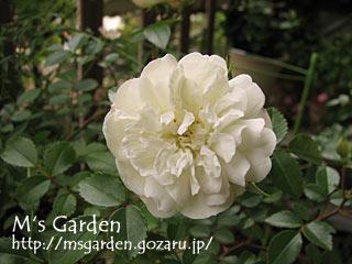 2009-05-18-03.jpg