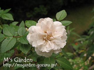 2009-06-01-11.jpg