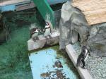 水族館ペンギン