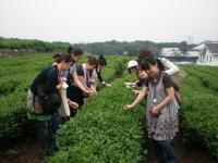 200906hangzhouchayishi3.jpg