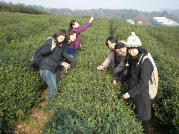 logjingchayuan.jpg