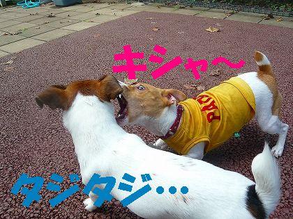 駒沢で吼える!
