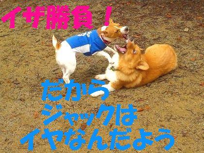 異犬種格闘戦