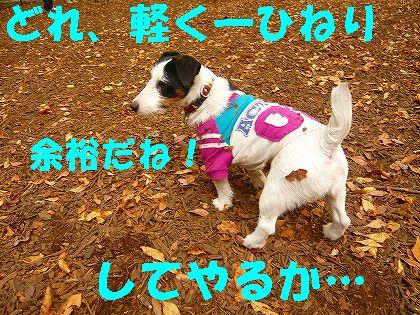 """""""シャコタン兄貴""""現る"""