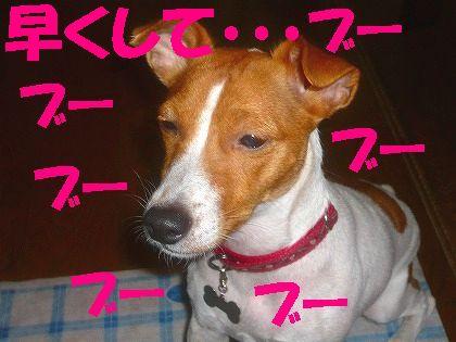 """""""ムギ""""の待ち方"""