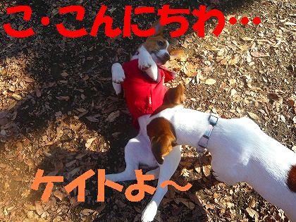 """""""お嬢""""のレッスン!"""