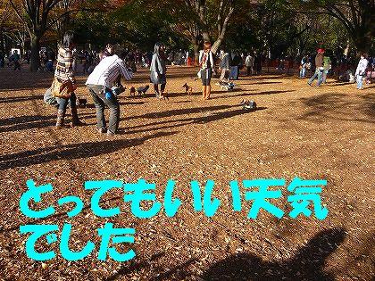 ある日の代々木公園