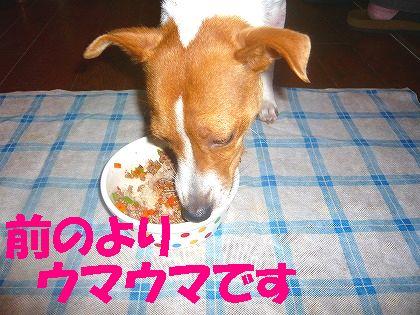 """正しい""""日本""""のワンコ"""