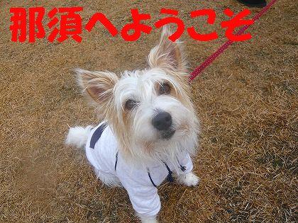 naluちゃん