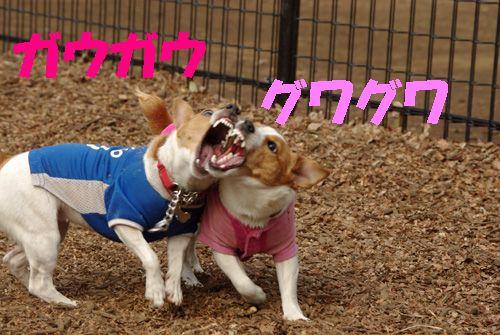 歯茎は健康ピンク色