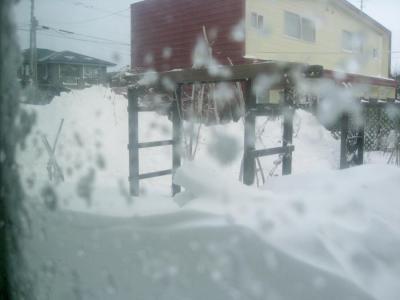 niwa0221.jpg