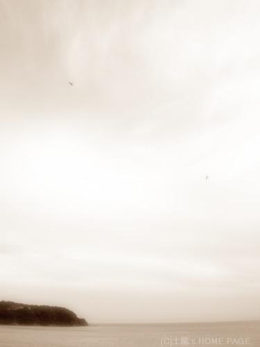 空と鳥 サムネイル