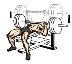 250_bench_press