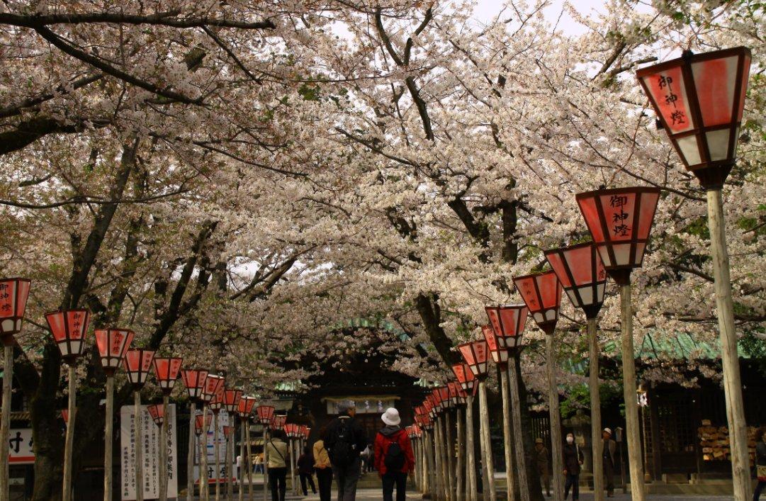 三嶋大社2012-0410-12