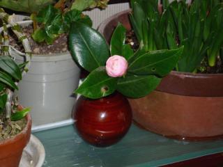 tnH22-02-14椿の花 (9)