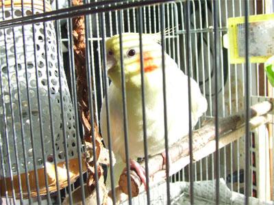 piro20081121-1.jpg