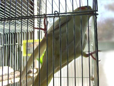 piro20081121-2.jpg