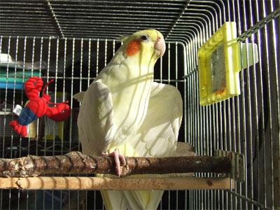 piro20081122-1.jpg