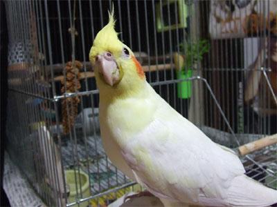 piro20081122-4.jpg