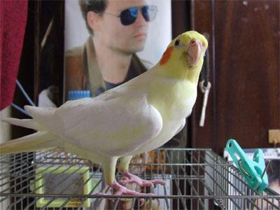 piro20081123-1.jpg