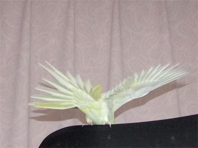 piro20081123-7.jpg