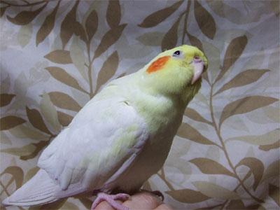 piro20081124-1.jpg