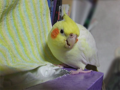 piro20081124-3.jpg