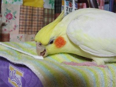 piro20081124-4.jpg