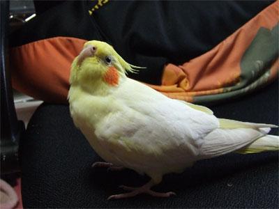 piro20081124-5.jpg